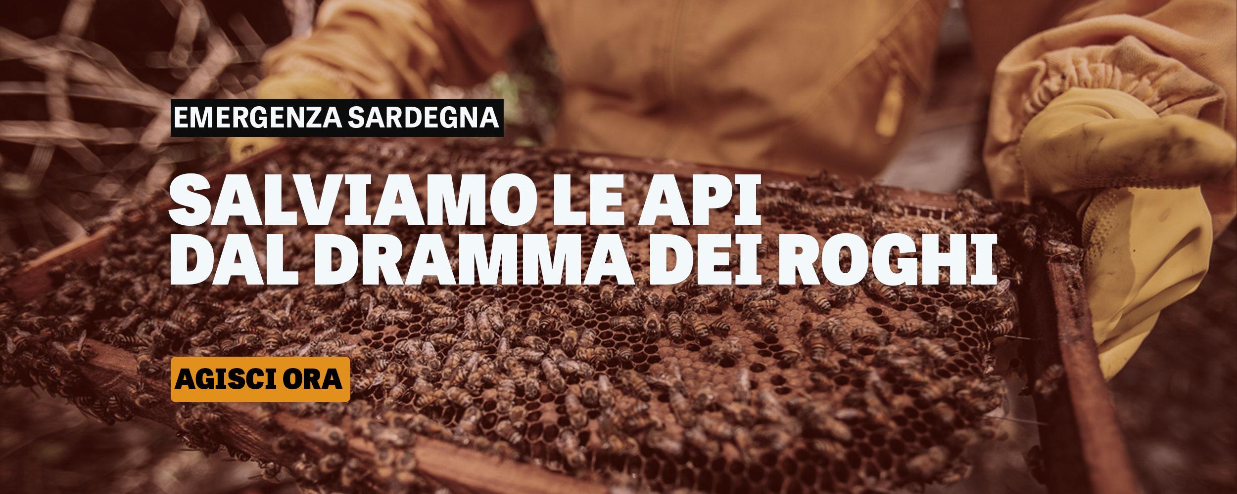 Salviamo le api della sardegna